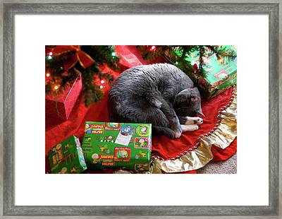 Framed Print featuring the photograph Tyla -- Regift by Joseph C Hinson Photography