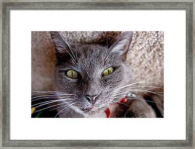Framed Print featuring the photograph Tyla -- Upside Down Cat by Joseph C Hinson Photography