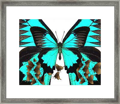 U Is For Ulysses Butterfly Framed Print