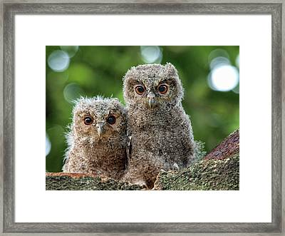 Ugh Oh Framed Print by Irawansubingarphotography
