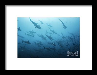 Environmental Issue Framed Prints