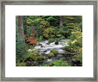 Upper Willamette River Framed Print by Leland D Howard