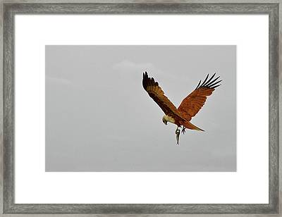 V For Victory Framed Print by Gulfu Photography
