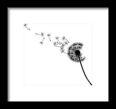 Seed Head Framed Prints