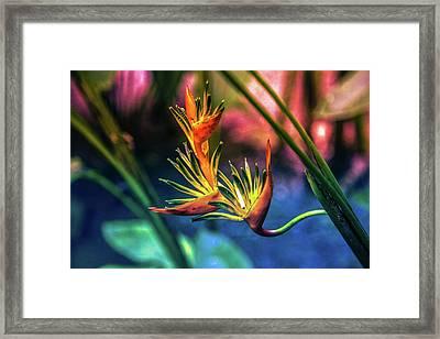 Vibrant Jungle Bird Framed Print