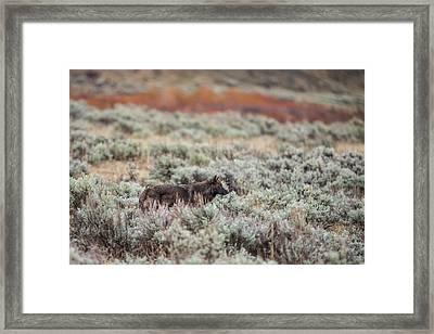W30 Framed Print
