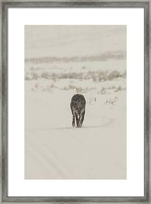 W33 Framed Print