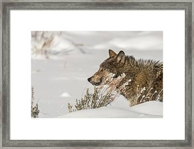 W39 Framed Print