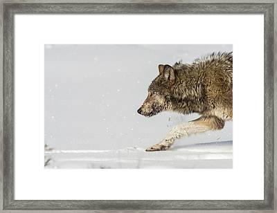W40 Framed Print