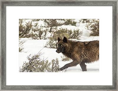 W5 Framed Print