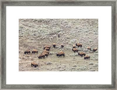 W56 Framed Print