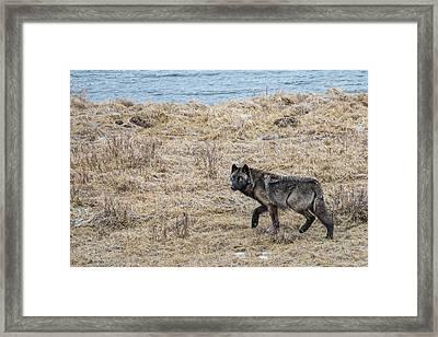 W58 Framed Print