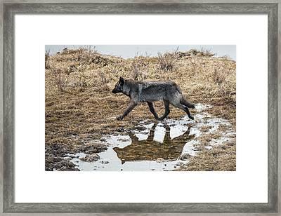 W60 Framed Print