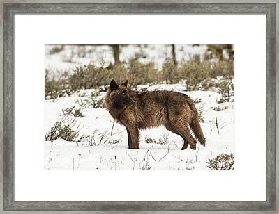 W9 Framed Print