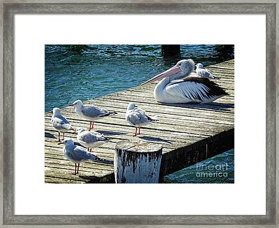 Waiting For A Feed Framed Print