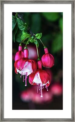 Wallpaper Flower Framed Print