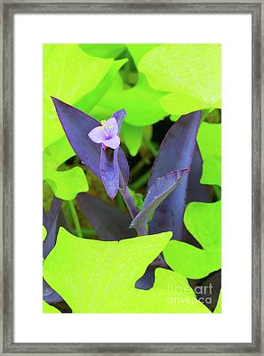 Wandering Through Green Framed Print by Steven Dillon