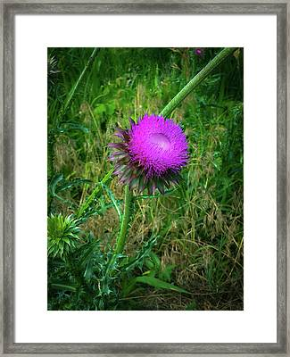 Wanna Be In Scotland Framed Print