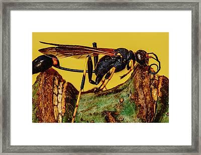 Wasp Just Had Enough Framed Print