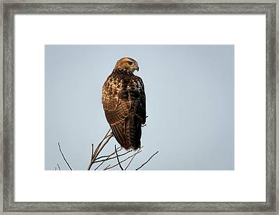 Framed Print featuring the photograph Watchful by Scott Bean