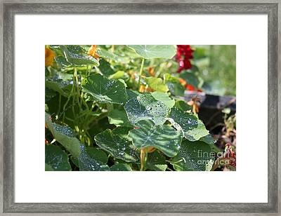 Framed Print featuring the photograph Water Beads After The Summer Rain by Tatiana Travelways