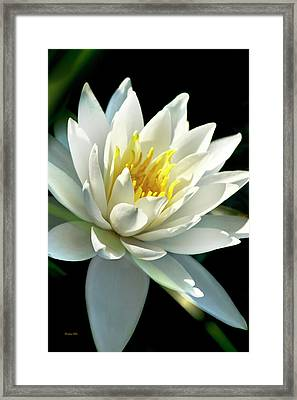 Framed Print featuring the photograph Water Lily by Christina Rollo