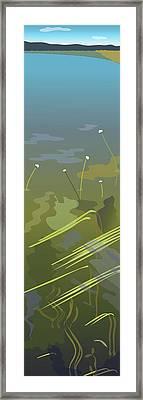 Water Weeds Framed Print by Marian Federspiel