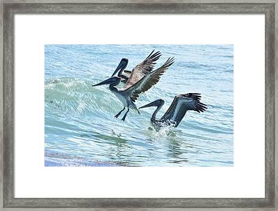 Wave Hopping Pelicans Framed Print