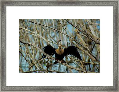 Welcome To The Stick Jungle Framed Print