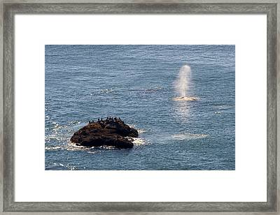 Framed Print featuring the photograph Whale Watching Yaquina Head Oregonn by Rospotte Photography