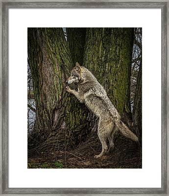 What's In There Framed Print