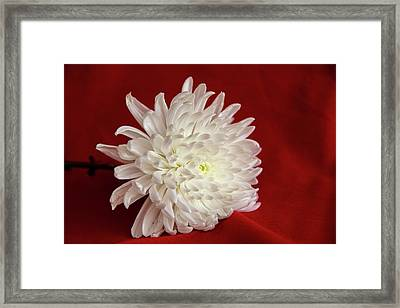 White Flower On Red-1 Framed Print