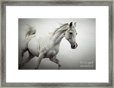 Framed Print featuring the photograph White Horse On The White Background Equestrian Beauty by Dimitar Hristov
