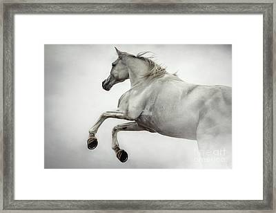 Framed Print featuring the photograph White Horse Rearing Up by Dimitar Hristov