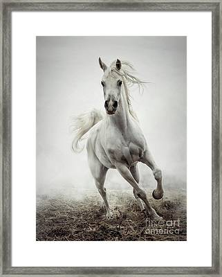 Framed Print featuring the photograph White Horse Running In Winter Mist by Dimitar Hristov