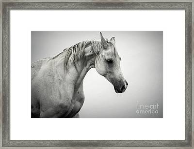 Framed Print featuring the photograph White Horse Winter Mist Portrait by Dimitar Hristov
