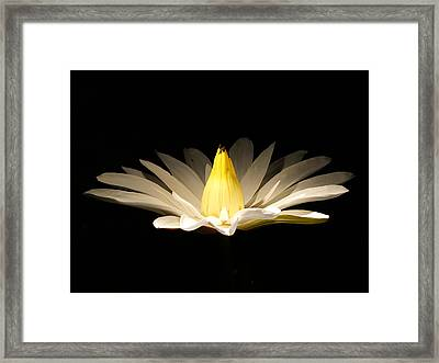 White Lily At Night Framed Print