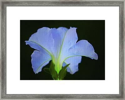 White Petunia Framed Print