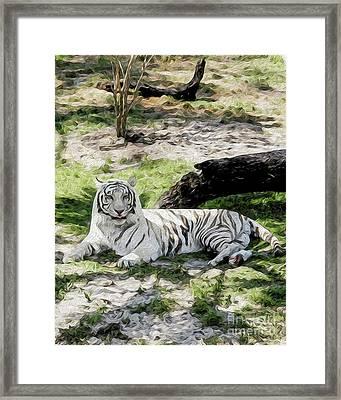 White Tiger At Rest Framed Print