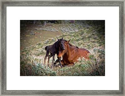 Wild Black New Born Foal And Mare Framed Print