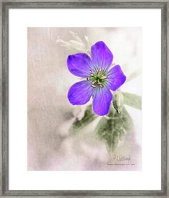 Wild Geranium Framed Print