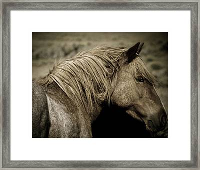 Wild Mustangs Of New Mexico 13  Framed Print
