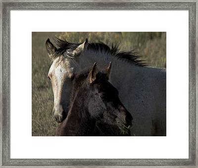 Wild Mustangs Of New Mexico 4 Framed Print