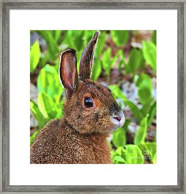Wild Rabbit Framed Print
