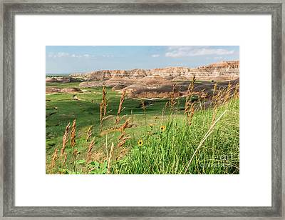 Wildflowers In The Badlands Framed Print