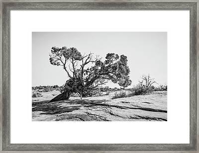 Framed Print featuring the photograph Will To Survive by Andy Crawford