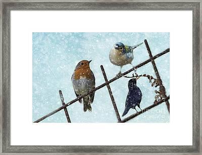 Winter Birds Framed Print
