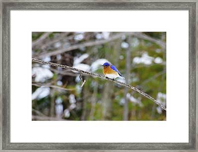 Winter Blue Framed Print