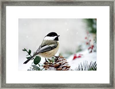 Framed Print featuring the photograph Winter Chickadee by Christina Rollo