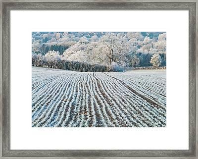 Winter Field, Little Rissington, Gloucestershire Framed Print by David Ross